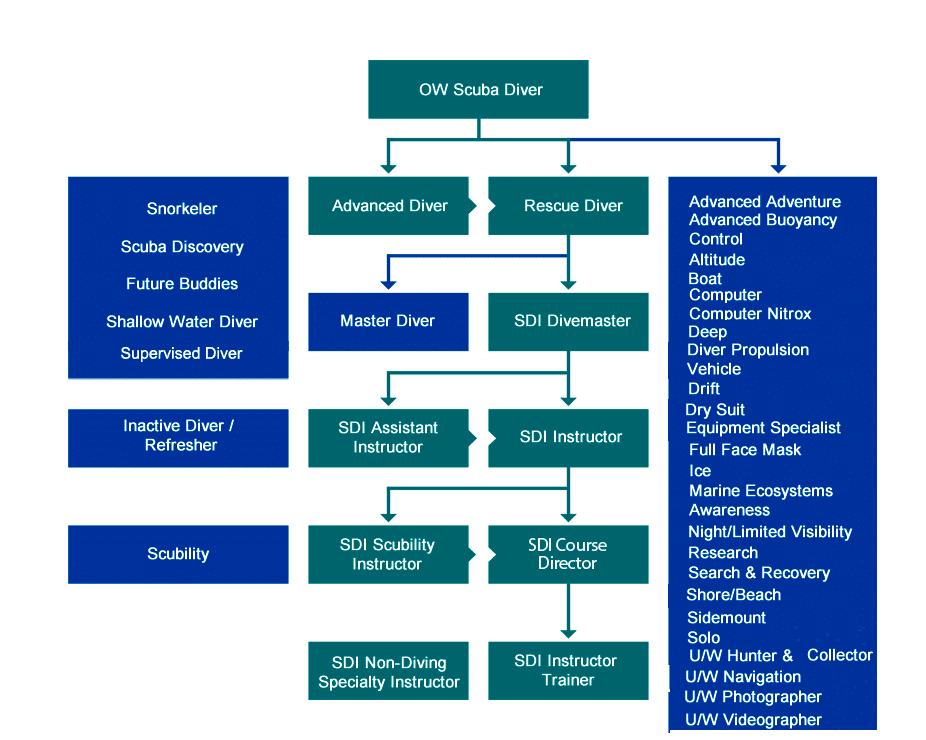 program szkoleniowy SDI