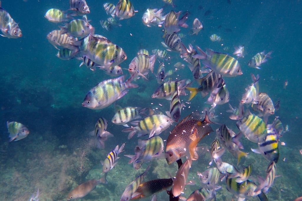 wyprawy nurkowe nurkowanie w polsce i zagranica